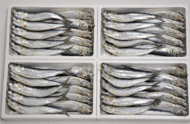 伊勢湾のいわしはとてもおいしいです。10尾入り1パック300円、2パック500円です。